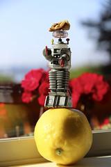 214/366 Balance (ruthlesscrab) Tags: wah werehere hereios 366the2016edition 3662016 day214366 1aug16 nut balancing walnut robot lemon lostinspace