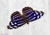 K46A8143 (Yvonne23021984) Tags: schmetterling butterfly hamm germany deutschland maxipark markro photography macrophotography canon canonphotography markofotografy canoneos7dmarkii insects insekten nature naturfotografie naturephotography closeup colorkey schmetterlinge butterflies