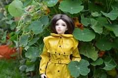 The yellow shine (2) (JL_the_Lion) Tags: theyellowshine bjd 13 sd doll sid cherie iplehouse my eliza outdoor autumn yellow shiny raincoat rainwear