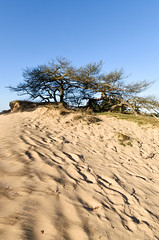Sporen wissen (Pieter ( PPoot )) Tags: stuifzand sporen boom heuvel cover tracks