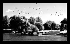 DSCF4162-2 copy (lo.tra) Tags: olst ferry birds lotra sky 38