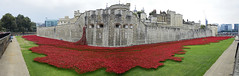 Blood Swept Lands And Seas Of Red, The Tower Of London 04/02/2014 (Gary S. Crutchley) Tags: world city uk travel red england panorama london tower art heritage history ceramic one 1 blood nikon war artist raw angle britain united capital wwi great wide first kingdom wideangle panoramic poppy poppies and ww1 lands nikkor swept vr afs seas d800 ifed 24120mm f3556 i of