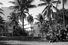 Dreaming (@GamezFrank) Tags: park trees sleeping shadow urban blackandwhite beach monochrome architecture mono blackwhite nap shadows florida miami homeless dream dreaming palmtrees artdeco grayscale miamibeach hobo southbeach greyscale oceandrive lummuspark