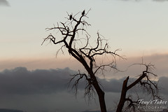 December 20, 2014 - Bald Eagles watch sunrise at St Vrain State Park. (Tony's Takes)