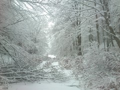 Y'a eu du vent rcemment (peupleloup) Tags: france hiver paysage vercors ambel