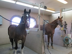 LosCedrosBath (Nancy D. Brown) Tags: arizona horses scottsdale loscedros