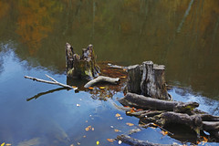 Stump in Lake (peghq) Tags: autumn lake reflection fall nature beauty forest colours stump armenia leafs parzlich