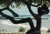 islaf-5111 (AndresMontanoh) Tags: sea landscape mar colombia paisaje isla caribe islafuerte