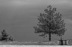 Rocher des Doms (feelnoxx) Tags: noiretblanc provence avignon doms