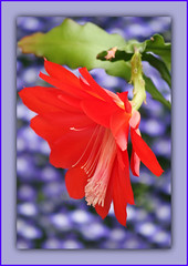 Looking Exotic In 2015 (bigbrowneyez) Tags: nature beautiful petals blossom unique gorgeous creative natura delicious exotic fancy framing lovely elegant fabulous artful delightful cornice bello unico bellissimo fioro flickrbokeh lookingexoticin2015 eastercactis fantastoic