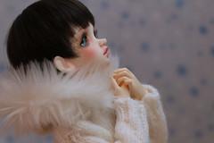 Dreaming of a White Christmas... (giddykipper/debra) Tags: bjd dim msd minifee flowne