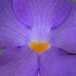 "romantische_hart_bloem <a style=""margin-left:10px; font-size:0.8em;"" href=""http://www.flickr.com/photos/117161355@N07/16036284919/"" target=""_blank"">@flickr</a>"