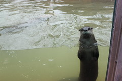 Tennessee Trip (ssamhun3980) Tags: animals fog zoo aquarium scenery tennessee gatlinburg mountians