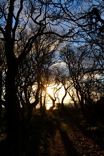 Sunrise through trees