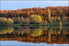 Quand l'automne dvoile ses costumes ambres (Excalibur67) Tags: autumn trees forest automne landscape nikon contemporary sigma arbres paysage reflexion reflets d7100 forts 1770f284dcoshsmc