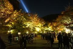 (ddsnet) Tags: travel plant japan nightshot sony autumnleaves 99  nippon  kansai    nocturne autumnal nihon  slt backpackers        kyotofu     singlelenstranslucent  99v nightviewsinjapan