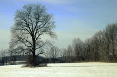 027a (d315thedeity) Tags: old ny tree field upstate friendlychallenges