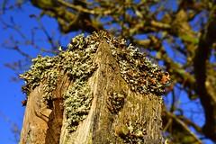 Brecon Beacons green weed (Bart Zin) Tags: wales unitedkingdom brecon beacons sigma1750mmf28exdchsm
