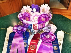 "State Fair Champions • <a style=""font-size:0.8em;"" href=""http://www.flickr.com/photos/25423792@N05/16197078281/"" target=""_blank"">View on Flickr</a>"