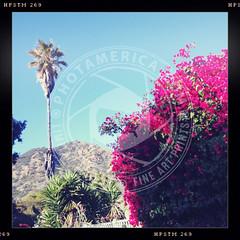 CALIFORNIA-326