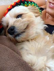Bela (luaraprocult) Tags: dog brasil cachorro traveling luaraoliveira luaraprocult