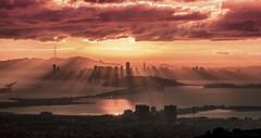 Sunset silhouette over San Francisco | Photography by Alex Burke (manbeachrm) Tags: sunset sunsets sunsetbeach sunsetpark sunrisesunset beachsunset sunsetting sunsetblvd sunsetsky sunsetstrip beautifulsunset amazingsunset sunsetcolors sunsetview floridasunset sunsetporn californiasunset sunsetphotography chasingsunsets scenicsunset sunsetphotographs sunsetlovers sunsetlover sunsethunter sunsetoftheday sunsetmadness instasunsets sunsetsniper instasunset igsunset