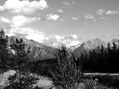 Jasper to Lake Louise Rest Stop (Alan FEO2) Tags: trees sky canada mountains monochrome clouds landscape outdoors jasper ab reststop alberta lakelouise bushes icefieldsparkway undergrowth layby highway93 2oef