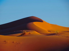 Curvy Dune (Don Csar) Tags: africa orange naturaleza sahara nature sand peace shadows desert dunes curves arena morocco maroc desierto marruecos naranja sombras curvas merzouga simetria ergchebbi marrok curveada