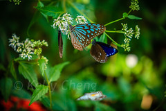 Taiwan-121113-279 (Kelly Cheng) Tags: travel color colour green tourism nature animals horizontal fauna butterfly daylight colorful asia day taiwan vivid nobody nopeople colourful traveldestinations  northeastasia
