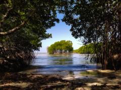Mangrove Portal (MiguelGandia) Tags: nikon puertorico mangrove caborojo bahiasucia galaxys7