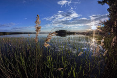 Midsummer (Kari Siren) Tags: sun lake reed finland evening midsummer jaala karijarvi