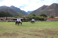IMG_6776 (University of Pennsylvania Alumni) Tags: peru machu picchu cuzco llama