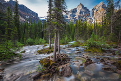 stuck in the middle (john dusseault) Tags: longexposure trees morainelake stream creek mountains glacier tree rock alberta canada