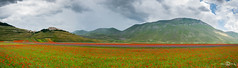 Fioritura, Castelluccio di Norcia, Monte Vettore (--marcello--) Tags: castellucciodinorcia monte vettore fioritura flowers fiorita mountains nature landscape naturephotography panorama paesaggio flowering blossoming upland