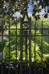 Happy FF (Omunene) Tags: fence fencefriday sanfranciscopubliclibrary foliage