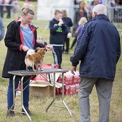 Judging at the dog show (Frank Fullard) Tags: frankfullard fullard dog dogshow show puppy crossmolina mayo irish irelandcandid portrait