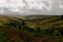 Bronte Moor (Richie Rue) Tags: nikond300 moor moorland bronte haworth yorkshire uk england heather landscape countryside colour color