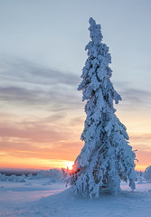 Lappland - Laponie ( Mathieu Pierre photography) Tags: lappland laponie finnland lapland snow north night sky light silence nature landscape northern polar circle sunlight coucher de soleil