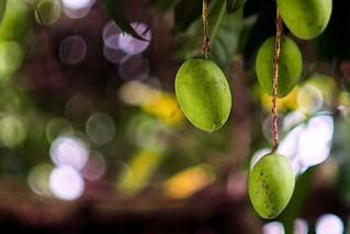 Green Mango Bokeh