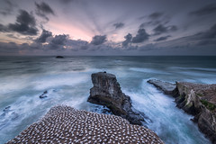 Sanctuary (Nick Twyford) Tags: longexposure sunset newzealand seascape clouds rocks waves wideangle auckland nz northisland westcoast gannets rockstack muriwai lateafternoonlight gannetcolony coastallandscape leefilters nikond800 lee09nd lee06gndhard nikkor160350mmf40 solmetageotaggerpro2