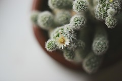 (what_marty_sees) Tags: cactus flower nature floral highcallingfocus
