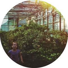 in botanical garden (grocap) Tags: park trees green glass girl garden fun botanical kid child run greenhouse
