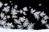 Fern Frost (Jeff Sprang) Tags: winter cold ice frozen frost crystals freezing frigid icecrystals windowfrost jackfrost iceflowers fernfrost