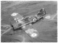 1:72 Brewster B-339B 'Buffalo', aircraft 9 of Groupe de Combat Mixte 1, Free French Air Force (Forces Ariennes Franaises Libres, FAFL); Morocco, 1941 (Whif/Hobby Boss kit conversion) (dizzyfugu) Tags: africa boss plane de french 1 buffalo force conversion aviation air north version free hobby torch morocco fantasy kit brewster combat groupe modell bau forces export fictional whatif mixte libres whif ariennes franaises fafl dizzyfugu b339b