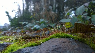 Waterdrops on Moss.