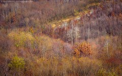 Autumn Colors (TalesOfAldebaran) Tags: road autumn orange mountain fall yellow forest canon landscape bush hill serbia best telephoto jupiter danilo 135mm srbija f35 37a cer planina stefanovic stefanovi  700d talesofaldebaran