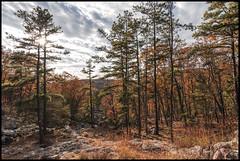 ... (MisterQueue) Tags: statepark park autumn trees red orange mountain tree fall colors leaves leaf colorful state mo foliage missouri sauk taumsauk taum