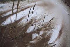 *** (joanna_keler) Tags: winter sea snow beach balticsea baltic saintpetersburg