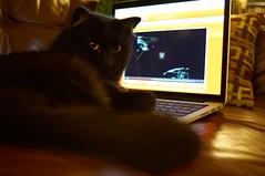 Going boldly where no cat has gone before... (Ben Strecker) Tags: startrek cat computer lulu kitty luna