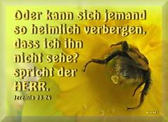 heimlich verbergen / hide in secret places (Martin Volpert) Tags: flower fleur christ jesus flor pflanze hide bible blomma christianity blume bibbia fiore blte blomst bibel virg christus lore biblia bloem blm iek floro kwiat flos heimlich ciuri verstecken bijbel kvet kukka cvijet flouer glauben christentum blth evangelium cvet zieds flle is floare blome iedas bibelverskarte mavo43